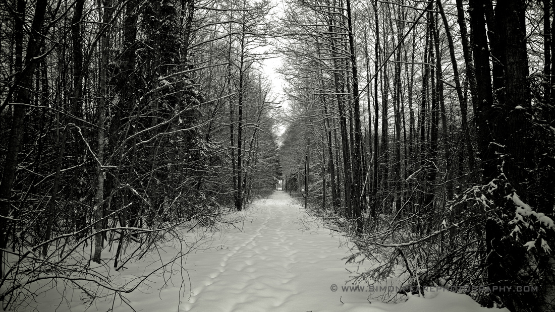 Fine Art Photograph and Print of Forest Walk in the Snow, Uddevalla, Sweden